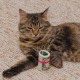 Voor de kat zijn een pak duizend die dollars met a worden gebonden Stock Foto