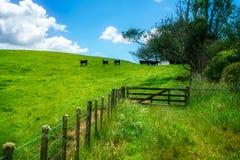 Voor de weg, vergeten wereldweg, Nieuw Zeeland 6 royalty-vrije stock foto