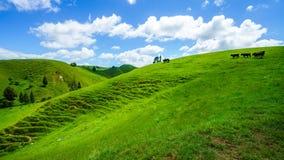Voor de weg, vergeten wereldweg, Nieuw Zeeland 8 stock afbeeldingen