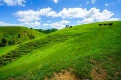 Voor de weg, vergeten wereldweg, Nieuw Zeeland 7 royalty-vrije stock afbeelding