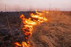Voor een hete de zomerdag, brandt het droge gras op het gebied burning royalty-vrije stock foto