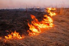 Voor een hete de zomerdag, brandt het droge gras op het gebied burning royalty-vrije stock foto's