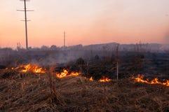 Voor een hete de zomerdag, brandt het droge gras op het gebied burning stock fotografie