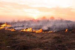 Voor een hete de zomerdag, brandt het droge gras op het gebied burning stock foto