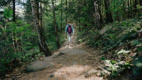 Voor een zonnige dag, loopt het mooie jonge toeristenmeisje, met een rugzak, maniervrouw, door het bos, de achtergrond stock videobeelden