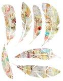 Voor het drukken geschikte Reeks grungy waterverf uitstekende veren op witte achtergrond royalty-vrije illustratie