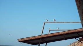 Voor het strand, op het dak van een oud, gebroken, vernietigd paviljoen, luifel, metaalstructuur, zitten 4 zeemeeuwen op de pijp  stock videobeelden
