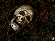 Voor menselijke die schedel in de grond met de wortels van de boom aan de kant wordt begraven Royalty-vrije Stock Foto