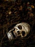 Voor menselijke die schedel in de grond met de wortels van de boom aan de kant wordt begraven Stock Fotografie