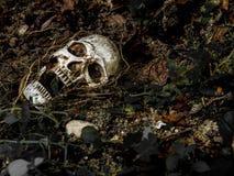 Voor menselijke die schedel in de grond met de wortels van de boom aan de kant wordt begraven Stock Afbeelding