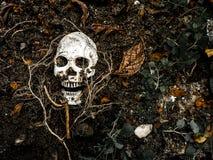 Voor menselijke die schedel in de grond met de wortels van de boom aan de kant wordt begraven Royalty-vrije Stock Foto's