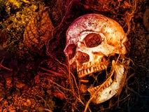Voor menselijke die schedel in de grond met de wortels van de boom aan de kant wordt begraven De schedel heeft vuil in bijlage aa stock fotografie