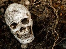 Voor menselijke die schedel in de grond met de wortels van de boom aan de kant wordt begraven De schedel heeft vuil in bijlage aa Royalty-vrije Stock Foto's