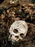 Voor menselijke die schedel in de grond met de wortels van de boom aan de kant wordt begraven De schedel heeft vuil in bijlage aa Stock Afbeelding