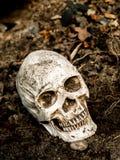 Voor menselijke die schedel in de grond met de wortels van de boom aan de kant wordt begraven De schedel heeft vuil in bijlage aa Royalty-vrije Stock Fotografie
