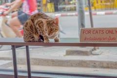 Voor slechts Katten Royalty-vrije Stock Afbeelding