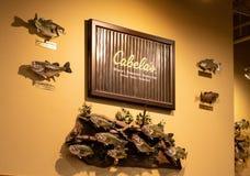 Voorbeeld van de vertoning van de de Leverancierstaxidermie van Cabela in opslag, Hazelwood, MO, de V.S. royalty-vrije stock fotografie