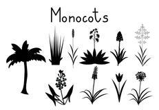 Voorbeelden van monocots Stock Fotografie