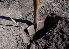 Voorbereiding van gaten voor het planten van installaties in het land stock foto
