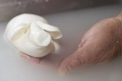 Voorbereiding van mozarella in een zuivelfabriek Stock Fotografie