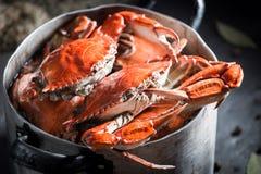 Voorbereiding voor eigengemaakte krab met pimentbes en laurierblad Stock Afbeeldingen
