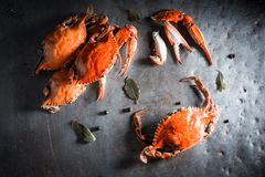Voorbereiding voor verse krab met pimentbes en laurierblad Royalty-vrije Stock Fotografie