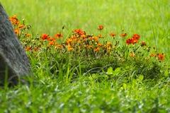 Voorbij een grote granietkei, in een expansief grasrijk park, legt een bed van heldere oranje bloemen royalty-vrije stock afbeeldingen