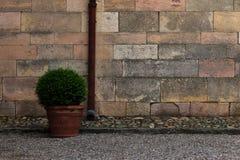 Voorfoto van de muur en de vaas van de kiezelsteengoot met struik Stock Foto's
