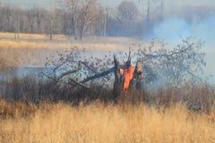 Voorgeschreven brandwond van onkruid Royalty-vrije Stock Foto