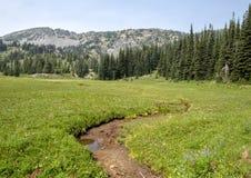 Voorgesteld wordt een weide in Onderstel Rainier National Park, Washington royalty-vrije stock foto