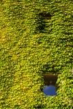Voorgevel van een wijnstok-bekleed landbouwbedrijfgebouw Royalty-vrije Stock Foto's