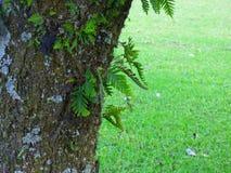 Voorgrond van een boomboomstam Royalty-vrije Stock Afbeelding