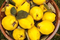 Voorgrond van gele kweeperen in een kom royalty-vrije stock fotografie