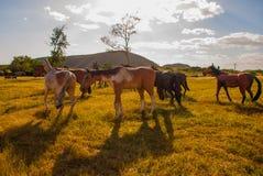Voorhistorische dierlijke modellen, beeldhouwwerken in de vallei van het nationale Park in Baconao, Cuba stock foto