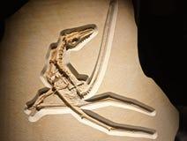 Voorhistorische gevleugelde dinosaurus met bevallige lidmaten royalty-vrije stock foto's