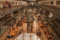 Voorhistorische skeletten en fossielen bij Galerij van Paleontologie en Vergelijkende Anatomie in Parijs Royalty-vrije Stock Afbeeldingen