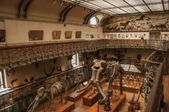 Voorhistorische skeletten en fossielen bij Galerij van Paleontologie en Vergelijkende Anatomie in Parijs Royalty-vrije Stock Foto