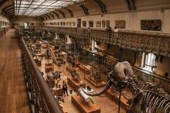 Voorhistorische skeletten en fossielen bij Galerij van Paleontologie en Vergelijkende Anatomie in Parijs Royalty-vrije Stock Foto's