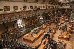 Voorhistorische skeletten en fossielen bij Galerij van Paleontologie en Vergelijkende Anatomie in Parijs Royalty-vrije Stock Afbeelding