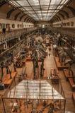Voorhistorische skeletten en fossielen bij Galerij van Paleontologie en Vergelijkende Anatomie in Parijs Stock Fotografie