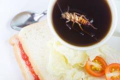 Voornslaap dood in een kop van koffie Het probleem in het huis wegens kakkerlakken die in de keuken leven Kakkerlak die wie eten stock afbeelding