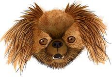 Voorportret van een bruine hond in vormen Stock Foto