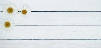 Voorraad-foto-zomer-achtergrond-houten-banner-van-kamille royalty-vrije stock foto