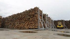 Voorraad of pakhuis, stapels van logboeken, timmerhout, hout, hout, bomen Grondgebied van houtbewerkingsinstallatie, fabriek stock videobeelden