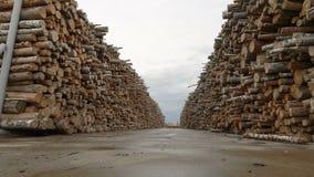 Voorraad of pakhuis, stapels van logboeken, timmerhout, hout, hout, bomen Grondgebied van houtbewerkingsinstallatie, fabriek stock video