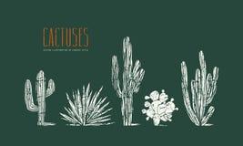 Voorraad vectorreeks van hand getrokken cactus stock illustratie