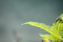 Voorraadfoto - groene varen op schors stock afbeelding