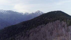 Vooruit beweegt over naakt dalingshout bos en sneeuwberg in de herfst of de winterzonsondergang Openlucht zonnige aard scape stock videobeelden