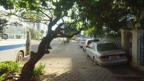 Vooruit lopend op een straat in Vientiane, Laos stock video