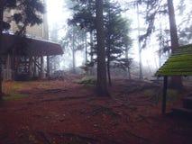 Vooruitzicht in een geheimzinnig bos Royalty-vrije Stock Afbeelding
